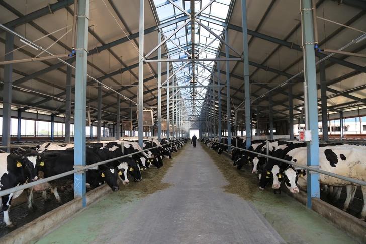 Под Тольятти открылся новый молочный комплекс