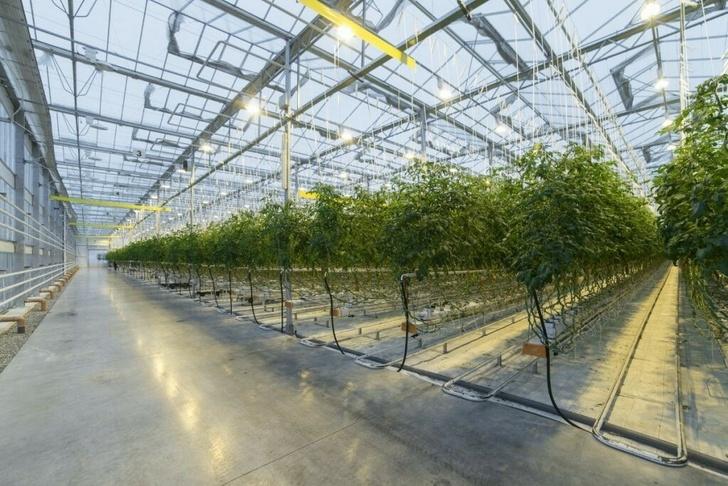 Новые предприятия АПК и пищевой промышленности в первом полугодии 2021 года